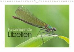 Faszinierende Libellen (Wandkalender 2020 DIN A4 quer)