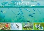 Fische in Teichen und Flüssen (Wandkalender 2020 DIN A2 quer)