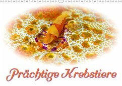 Prächtige Krebstiere (Wandkalender 2020 DIN A3 quer)