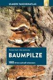 Baumpilze