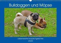Bulldoggen und Möpse (Wandkalender 2020 DIN A3 quer)