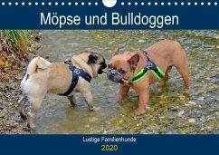 Möpse und Bulldoggen (Wandkalender 2020 DIN A4 quer)