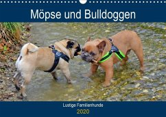 Möpse und Bulldoggen (Wandkalender 2020 DIN A3 quer)