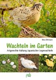 Wachteln im Garten