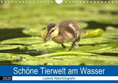 Schöne Tierwelt am Wasser (Wandkalender 2020 DIN A4 quer)
