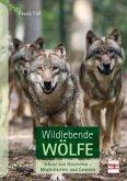Wildlebende Wölfe (Mängelexemplar)