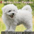 Just Bichon Frise Puppies 2020 Wall Calendar (Dog Breed Calendar)