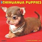 Just Chihuahua Puppies 2020 Wall Calendar (Dog Breed Calendar)