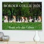 Border Collie 2020(Premium, hochwertiger DIN A2 Wandkalender 2020, Kunstdruck in Hochglanz)