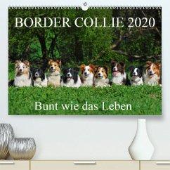 Border Collie 2020(Premium, hochwertiger DIN A2 Wandkalender 2020, Kunstdruck in Hochglanz) - Starick, Sigrid
