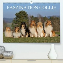Faszination Collie 2020(Premium, hochwertiger DIN A2 Wandkalender 2020, Kunstdruck in Hochglanz) - Starick, Sigrid
