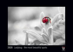 Ladybug - the most beautiful spots 2020 - Black Edition - Timocrates wall calendar with US holidays / picture calendar / photo calendar - DIN A3 (42 x 30 cm) - Herausgeber: Timokrates Verlag