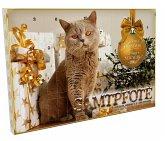 Katzen Adventskalender