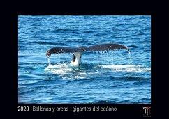 Ballenas y orcas - gigantes del océano 2020 - Edición Negra - Timokrates calendario de pared, calendario de fotos - DIN A3 (42 x 30 cm) - Herausgeber: Timokrates Verlag