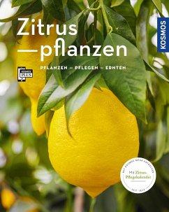 Zitruspflanzen - Große Holtforth, Dominik