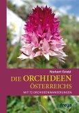 Die Orchideen Österreichs (eBook, ePUB)