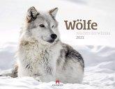Wölfe - Wächter der Wildnis 2021