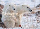 Eisbären 2021