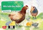 Wie lebt das Huhn? Kamishibai Bildkartenset.