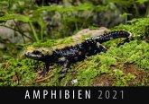 Amphibien 2021