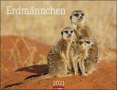 Erdmännchen - Kalender 2021
