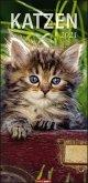 Katzen - Kalender 2021