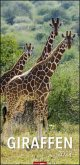Giraffen - Kalender 2021