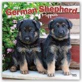 German Shepherd Puppies - Deutsche Schäferhunde - Welpen 2021 - 18-Monatskalender mit freier DogDays-App