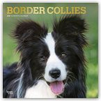 BORDER COLLIES 2021 SQUARE FOIL
