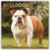 Bulldogs - Bulldoggen 2021 - 18-Monatskalender mit freier DogDays-App