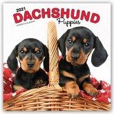 Dachshund Puppies - Dackelwelpen 2021 - 18-Monatskalender mit freier DogDays-App