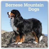 Bernese Mountain Dogs - Berner Sennenhunde 2021 - 18-Monatskalender mit freier DogDays-App