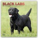 Black Labrador Retrievers - Schwarze Labradore 2021 - 18-Monatskalender mit freier DogDays-App