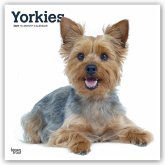 Yorkshire Terriers International - Yorkshire Terrier 2021 - 18-Monatskalender