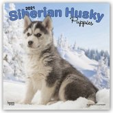 Siberian Husky Puppies - Husky-Welpen 2021 - 18-Monatskalender mit freier DogDays-App