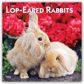 Lop-eared Rabbits - Kaninchen mit Hängeohren/Widderkaninchen 2021 - 18-Monatskalender