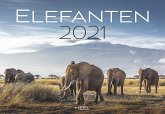 Elefanten 2021