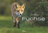 Füchse 2021