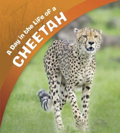 A Day in the Life of a Cheetah - Amstutz, Lisa J.