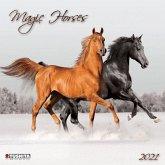 Magic Horses 2021 What a Wonderful World
