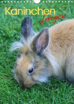 Kaninchen fotogen (Wandkalender 2021 DIN A4 hoch)
