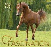 Fascination 2021