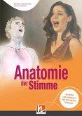 Anatomie der Stimme