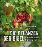 Die Pflanzen der Bibel