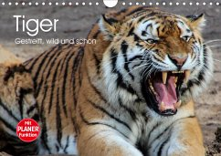 Tiger. Gestreift, wild und schön (Wandkalender 2021 DIN A4 quer)