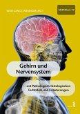 Gehirn und Nervensystem (eBook, ePUB)