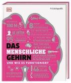 #dkinfografik. Das menschliche Gehirn und wie es funktioniert