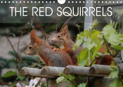 The red squirrels (Wall Calendar 2021 DIN A4 Landscape)