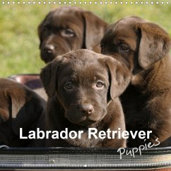 Labrador Retriever Puppies (Wall Calendar 2021 300 × 300 mm Square)