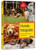 Hundefotografie - das perfekte Hunde Foto